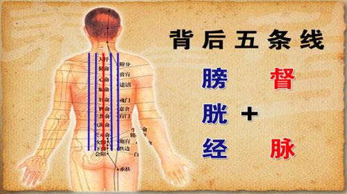 背部膀胱经_人体背部督脉和膀胱经上众多脏腑的腧穴