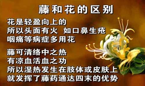 养生堂2013年12月13日视频,吕培文,通经活络话藤药2,湿热阻络