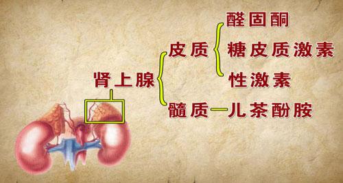 2014年8月6日养生堂_3o号养生堂-2014年3月24养生堂/2017年2月3日养生堂/.