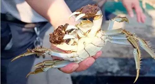 补充维生素A的美食―螃蟹,为什么湖蟹首推阳澄湖?