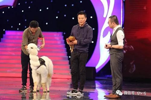 幸福来敲门20171026视频,动物训练师宁蔚带萌宠羊驼里欧