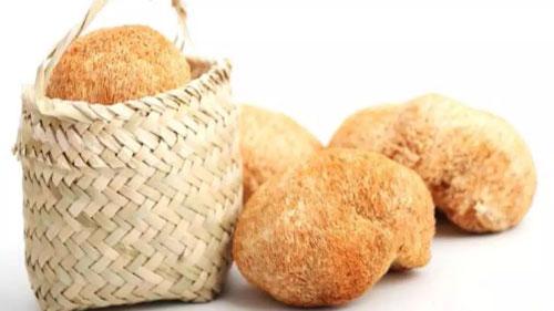 猴头菇能治胃病吗,干猴头菇怎么泡发最好,秋季进补首选菌菇类食材