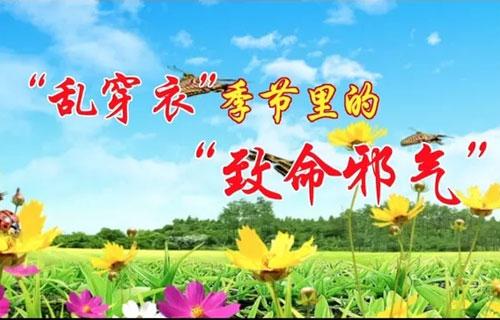 养生堂20190410,崔红生,透邪外达畅全身,畅透小方,三仁汤
