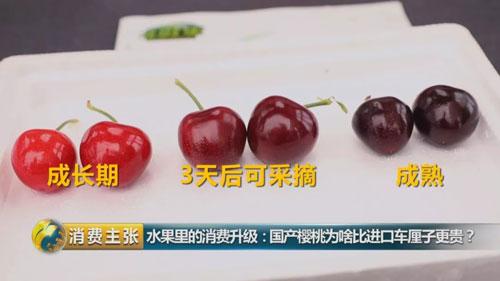 消费主张20190430,国产樱桃为啥比进口车厘子更贵?