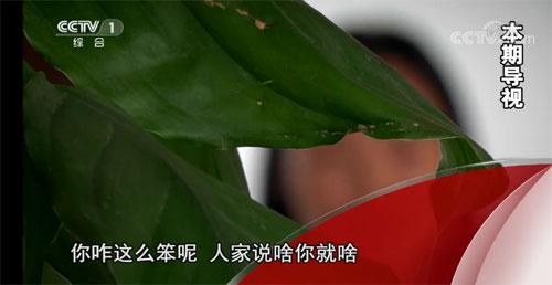 今日说法20190718,骗中骗,电信诈骗,河南平舆县谢雅菲