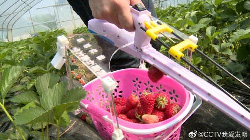 我爱发明20190803,草莓采摘器,快手摘草莓,西南石油大学