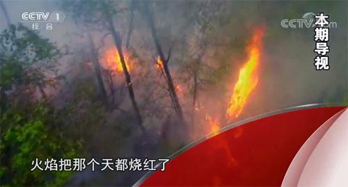 今日说法20191114视频,燃烧的山岭