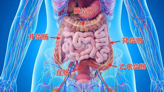 养生堂20201026,冀明,抓住肠道的求救信号,结直肠癌,肠息肉
